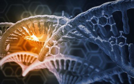 Genetic Risk for Obesity, High Blood Pressure Linked to Shorter Lifespan, Study Finds