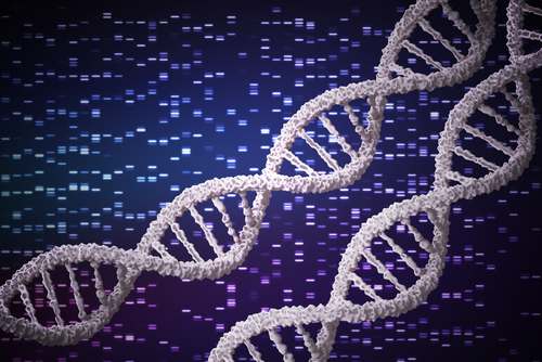 Genetics Affect Weight Loss in Response to Lifestyle Interventions, Study Shows